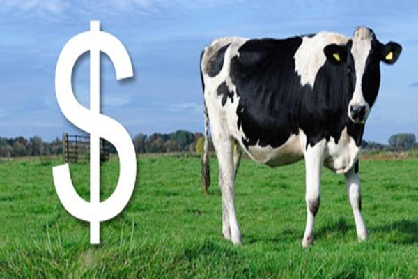 Industri peternakan susu - Ilustrasi/sunlife.co.nz