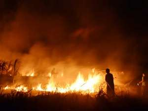 Lahan Tebu Milik Pemkot Madiun Terbakar