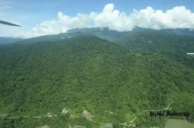 Akibat Perubahan Iklim, Hutan Tropis pun Terancam…