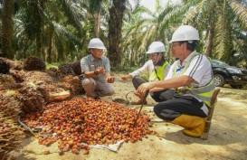 Cargill Dorong Peningkatan Produktivitas Petani Sawit di Sumsel