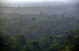 Pemerintah Inggris Didesak Buat Aturan Lindungi Hutan Hujan Tropis