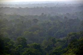 Pemerintah Inggris Didesak Buat Aturan Lindungi Hutan…