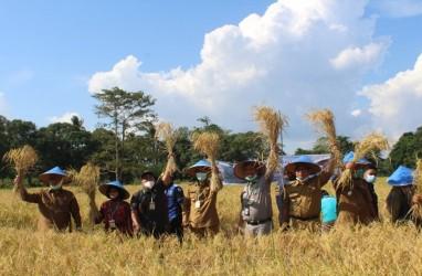 Pemkab OKI Dorong Petani Panen 2 Kali Dalam Setahun