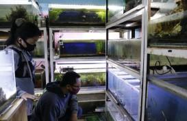 Ide Bisnis Aquascape dan Kisah Sukses saat Pandemi