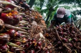 Dua Pekan Harga TBS Kelapa Sawit Riau Turun