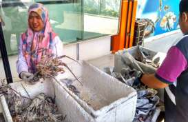 4 Unit Pengolahan Ikan Ekspor di Sumbar Telah Kantongi Sertifikat HACCP