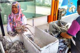 4 Unit Pengolahan Ikan Ekspor di Sumbar Telah Kantongi…