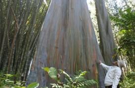Wah, Pohon Pelangi Terindah di Dunia Ternyata Ada di Indonesia