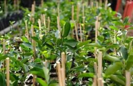 Sulsel Dorong Produksi Jeruk Keprok Selayar jadi Varietas Unggul