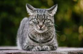 Pecinta Kucing, Begini Caranya Komunikasi dengan Peliharaanmu