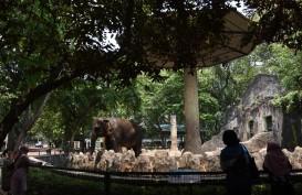 Kebun Binatang Ragunan Buka Lagi, Pengunjung Wajib Daftar Online