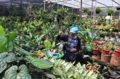 Bisnis Tanaman Hias di Masa Pandemi Bikin Berbunga