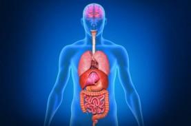 Berapa Sebenarnya Jumlah Organ di Tubuh Manusia