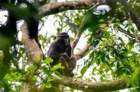 Temuan Fosil Monyet Tertua di China yang Berjuang…