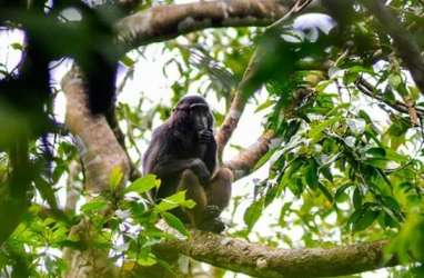 Temuan Fosil Monyet Tertua di China yang Berjuang Lawan Perubahan Iklim, Ini Penampakannya