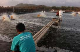 Mengenal Empat Layanan eFishery, Pendukung Pembudidaya Ikan