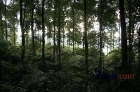 UU Cipta Kerja : Konservasi Hutan dan Keselamatan…