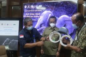 Manfaatkan Teknologi Satelit untuk Lindungi Gajah…