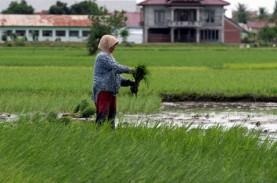 Pemulihan Lahan Pertanian Bisa Memperlambat Kepunahan…
