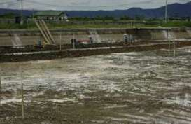 Ekspor Udang Sulsel Naik 61 Persen berkat Hilirisasi Perikanan