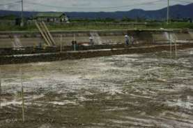 Ekspor Udang Sulsel Naik 61 Persen berkat Hilirisasi…