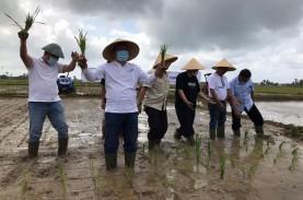 Intani Bangun Korporasi Petani 1.000 Hektare di Sukabumi