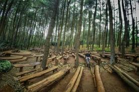 Pengusaha Hutan Siap Pasok Bahan Baku Co-firing Biomassa