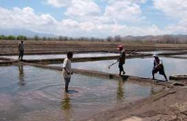 Petani Garam di Jeneponto dan Pangkep Alih Usaha Antisipasi La Nina
