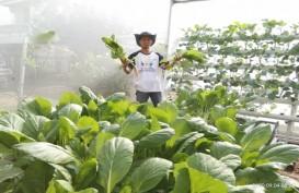 Jual Sayuran Online, Petani Hidroponik Palembang Bertahan di Tengah Pandemi