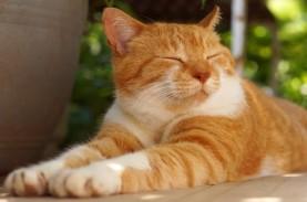 Ada Gambar Kucing Raksasa di Lereng Bukit di Peru