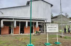 Pembangkit Listrik Biomassa Bambu di Mentawai Terus Digenjot