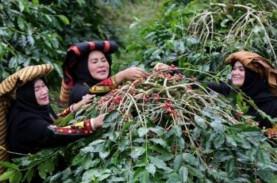 Panen Terhambat La Nina, Produksi Kopi Vietnam Diramal…
