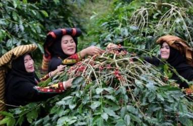 Panen Terhambat La Nina, Produksi Kopi Vietnam Diramal Merosot