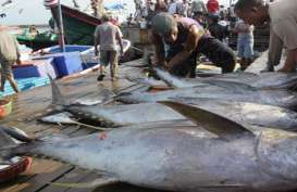 Mercusuar Perikanan Tuna: Data Stok harus Diupdate