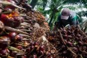 Harga TBS Sawit Riau Kembali Menguat Capai Rp2.123 Per Kilogram
