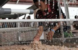 Demi Ketahanan Pangan, Pemerintah Dorong Pabrik Sagu