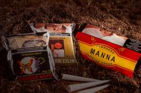 Laba Indonesian Tobacco (ITIC) Naik 21 Kali Lipat,…