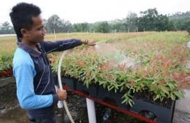 PROGRAM KEMITRAAN PTPN V : Produktivitas Petani Sawit Dapat Jaminan