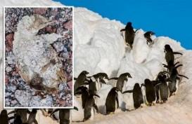 "Peneliti Temukan Pemakaman ""Mumi"" Penguin Berusia 5.000 Tahun"