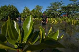 Menko Luhut Targetkan Penanaman Mangrove Selesai 4…