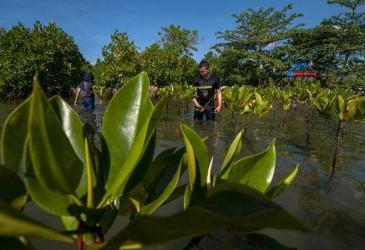 Menko Luhut Targetkan Penanaman Mangrove Selesai 4 Tahun