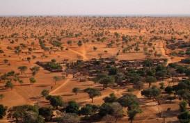 Ternyata Miliaran Pohon Tumbuh di Gurun Sahara