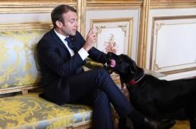 Presiden Prancis Ramal Covid-19 Bertahan hingga Musim…
