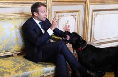 Presiden Prancis Ramal Covid-19 Bertahan hingga Musim Panas 2021