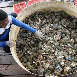 Permintaan Kepiting Soka di Aceh Mulai Meningkat