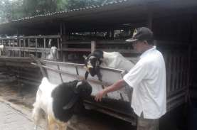 Delapan Kawasan Agribisnis Sokong Pengembangan Kulon…