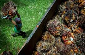 Fluktuasi Harga CPO Bursa Malaysia Buat TBS Sawit Riau Turun