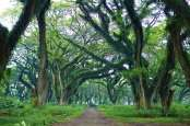 Wisata Magis ala Hutan The Lord of The Rings di Banyuwangi