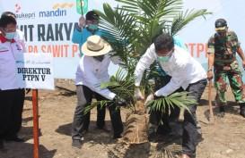 Petani dan PTPN V Komitmen Jaga Produktivitas TBS Kelapa Sawit