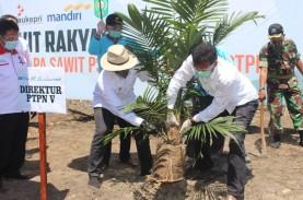 Petani dan PTPN V Komitmen Jaga Produktivitas TBS…